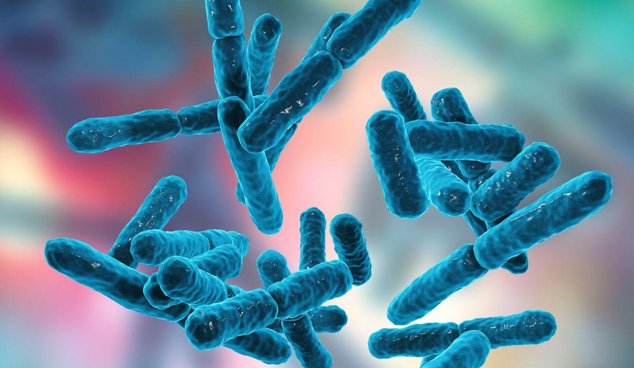 האם הפרוביוטיקה שלך באמת עוזרת לך?