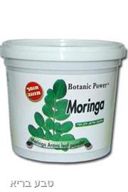 מורינגה ערבה אבקה המקורית